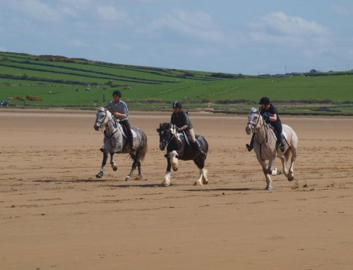 Enjoy horse riding in the marvellous rural surroundings of Co. Sligo